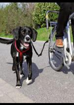 Catalogues et collections Animalis : Préparez les vacances avec votre chien