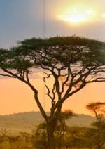 Catalogues et collections Corsair : La beauté du Sénégal à prix mini...